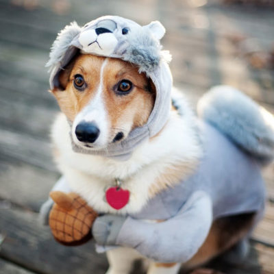 dog-dress-up