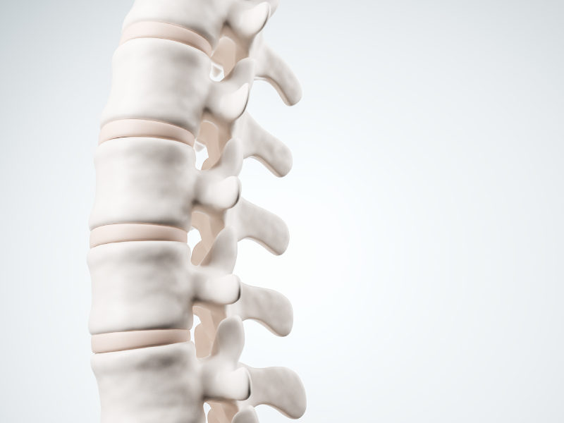 spine chiropractic image
